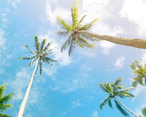 Palm trees against sunny blue sky with clouds