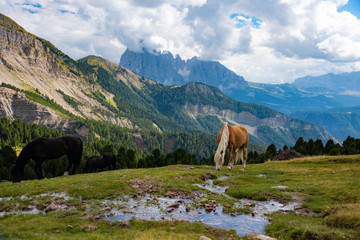 Horse over Dolomite landscape Geisler or Odle mountain Dolomites Group, Val di Funes, tourist region of Italy