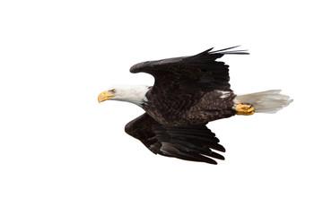 Eagle Glides on White Background
