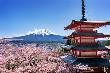 Wall Mural - Cherry blossoms in spring, Chureito pagoda and Fuji mountain in Japan.