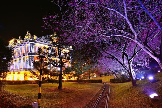 Night in the park with cherry blossoms