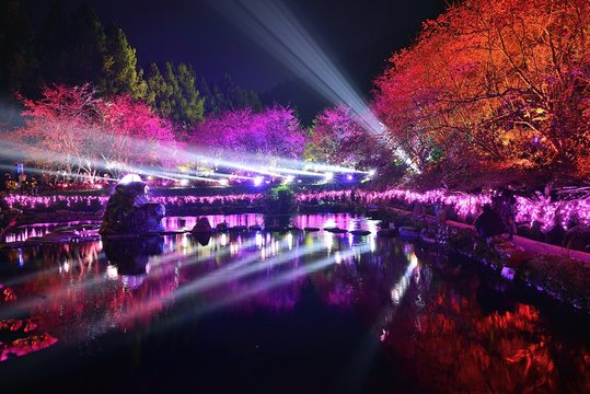 Laser rays show in Cherry blossom festival,Taiwan