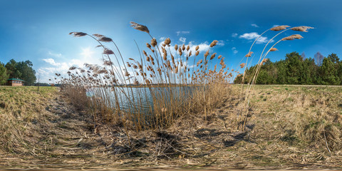 full seamless hdri spherical panorama 360 degrees angle view on thickets of reeds near wide lake in sunny day. 360 panorama in equirectangular projection, ready VR AR virtual reality content