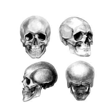 Human skull in different positions. Vector illustration