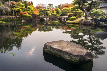Spectacular autumn foliage reflected in the water and the classical bridge over the pond at Koko-en Gardens in Himeji, Japan with a large rock and one Koi Fish in the foreground.