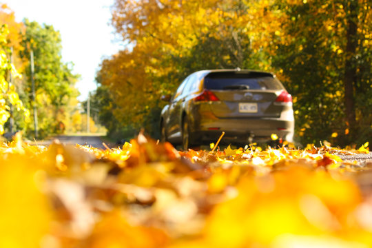Sunny Autumn Country Drive