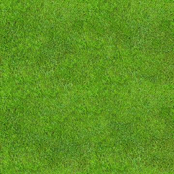 Seamless Green Lush Grass Texture