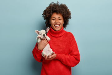 Stunning lovable girl carries little french bulldog puppy, expresses love to pet, smiles broadly, wears oversized red jumper, isolated over blue background. Women, animals and relationship concept