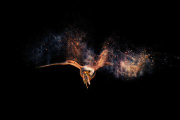 Flying wild bird. Bird of prey. Dispersion, splatter effect. Black background.