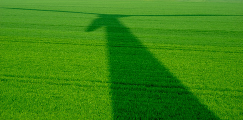 shadow of wind turbine on lush cereal field