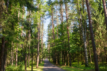 Asphalt road through the forest on a summer day