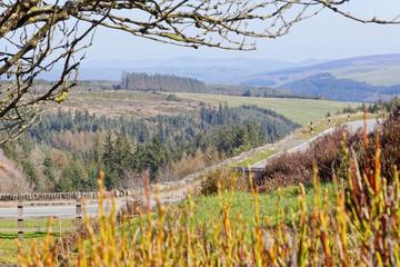 Fototapeta Springtime view of the road in the mountains of Snowdonia, Walia, UK obraz
