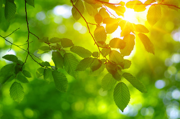 Green leaves and sun Wall mural
