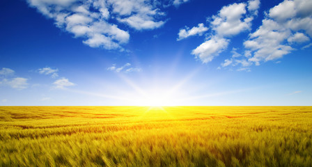 Wall Mural - Wheat field and sun