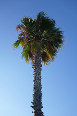 palm leaves against the blue sky