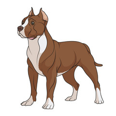 Color illustration of a chocolate, brown pit bull with white spots. Isolated vector object on white background.