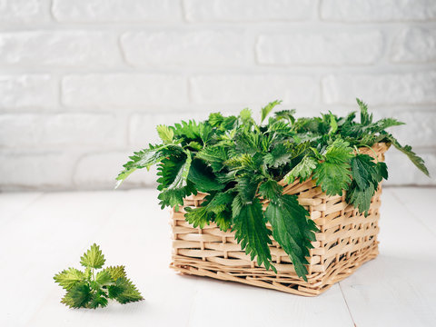 Basket of fresh stinging nettle leaves on white wooden table. Nettle leaf with copy space. Horizontal