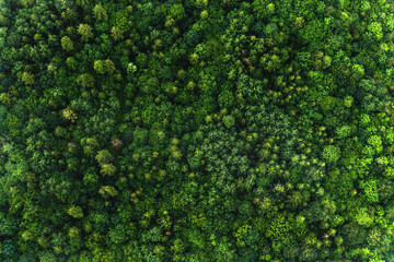 Top view of the area green forest. Nature texture Wall mural