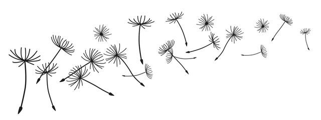 Fototapeta Abstract black dandelion, flying seeds of dandelion - vector