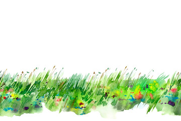 Field of flowers.Seamless meadow.Summer picture. White background.Watercolor hand drawn illustration.