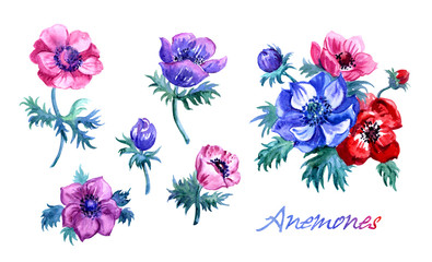 Set of anemone flowers, watercolor illustration on white background, isolated with clipping path.
