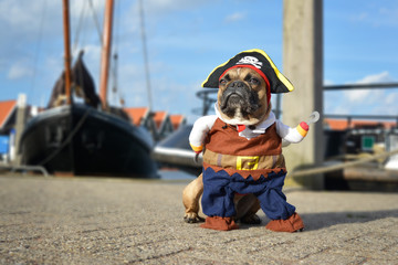 Funny brown French Bulldog dog  dressed up in pirate costume with hat and hook arm standing at harbour with boats in background Fototapete