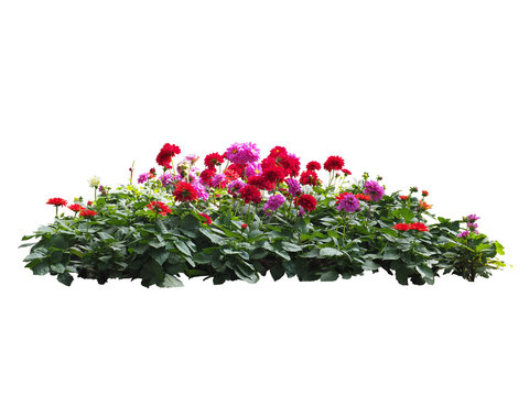 flower plant bush tree isolated with clipping path on white background
