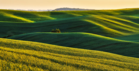 hilly field. picturesque hills of a spring field. spring hills Fototapete