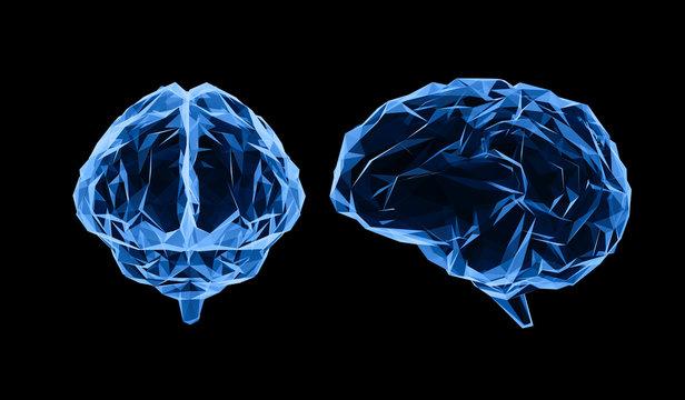 x-ray polygonal brain