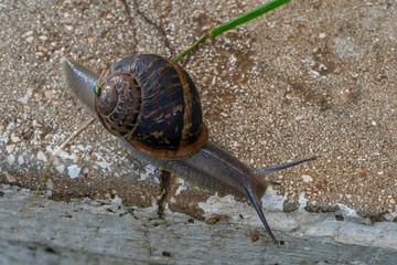Snail on a pavement