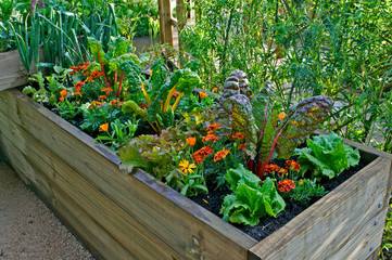 Aluminium Prints Garden A raised bed of vegetables and flowers in a urban garden