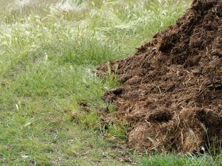 Manure aka muck. Natural fertilizer. Background with copyspace.