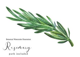 Greek fresh Rosemary