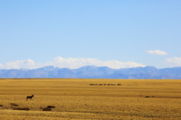 Poster de jardin Desert de sable sheep on a mountain pasture