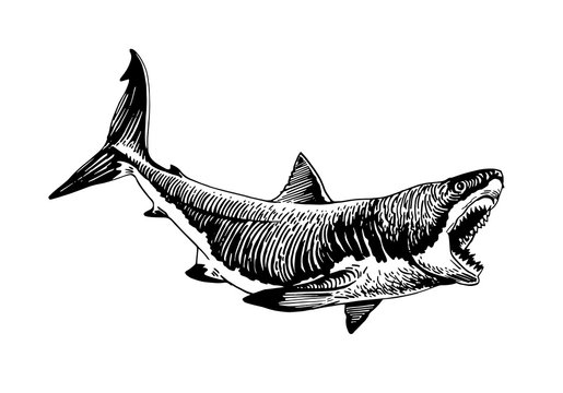 Graphical white shark isolated on white background,vector ink pen illustration,tattoo