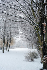 Tree Alley in Germany covered with snow