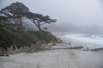 Carmel Tree in Fog