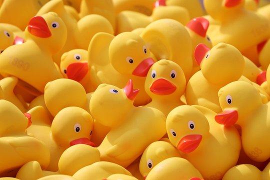 gelbe Plastikenten mit rotem Schnabel