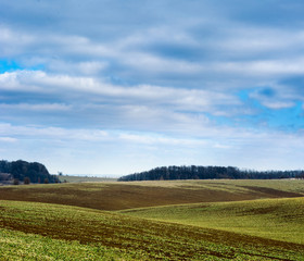 Fototapete - Undulating plowed field in early spring, a group of trees on the horizon, white clouds in the blue sky