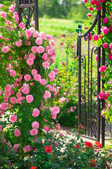 Papiers peints Jardin roses in the garden