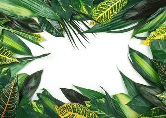 Frame from  fresh tropical leaves on white background.