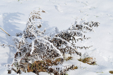 frost covered plant on snowy meadow