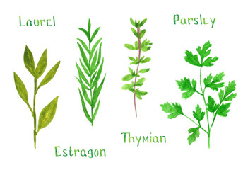Set of green herbs, laurel, estragon, thyme, parsley, hand drawn watercolor illustration isolated on white