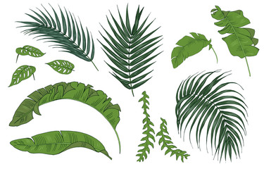 Tropical plant leaves, set, vector illustration