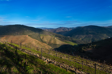 View of the terraced vineyards in the Douro Valley near the village of Pinhao, Portugal; Concept for travel in Portugal and most beautiful places in Portugal