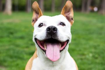 Friendly Dog having a big smile