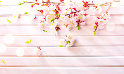 Wall Mural - Easter Spring Blossom on white wooden plank background. Easter Apricot flowers on wood border art design. Pink blooming tree on wood