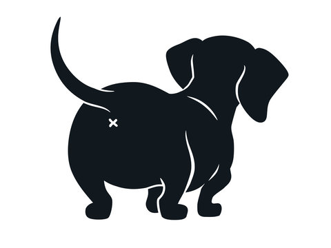Cute dachshund sausage dog vector cartoon illustration isolated on white. Simple black and white silhouette drawing of  wiener puppy, rear view. Funny doxie butt, dog lovers, pets, animals theme.