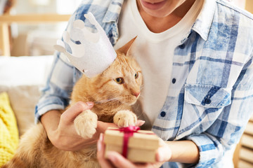 Portrait of unrecognizable woman giving Birthday  present to ginger cat wearing crown, copy space