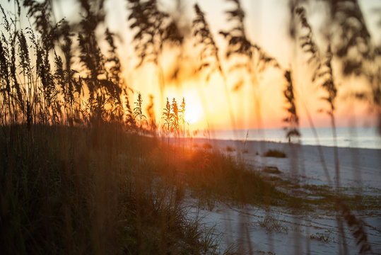 Romantic   sunset at Gulf Shores Alabama near Orange beach as seen through the sea oats. The colorful bokeh of this artistic shot is compliments of the glorious sunset over the white sand.